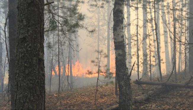 В лесах Моркинского района сохраняется IV класс пожарной опасности
