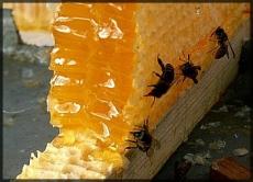 """Марийские пчелы будут производить мед для  ОАО """"Марбиофарм"""""""