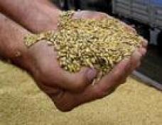 В Марий Эл и Нижегородской области в преддверии дачного сезона торгуют семенами сомнительного качества