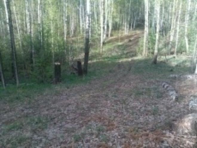 В Марий Эл открыли леса для посещения