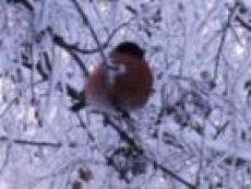 Для птиц, зимующих в Марий Эл, изготовили 894 «столовые»