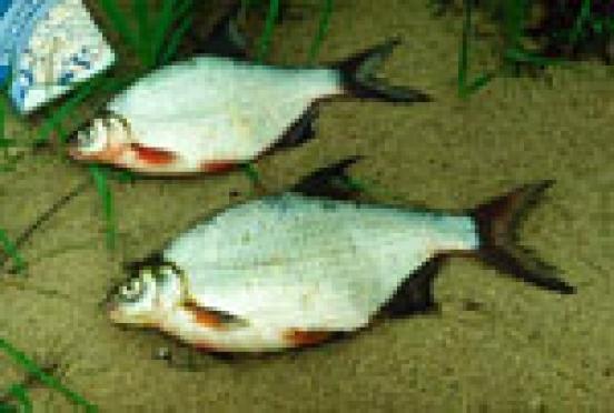 Ихтиологи Марий Эл спокойны за водных обитателей