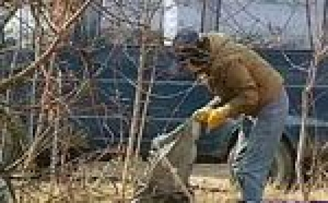 Студенты Марий Эл очистили столицу республики от мусора