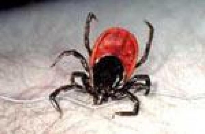 В Марий Эл зарегистрированы первые случаи клещевого энцефалита