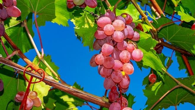 Ставку НДС на плодово-ягодную продукцию хотят снизить до 10%