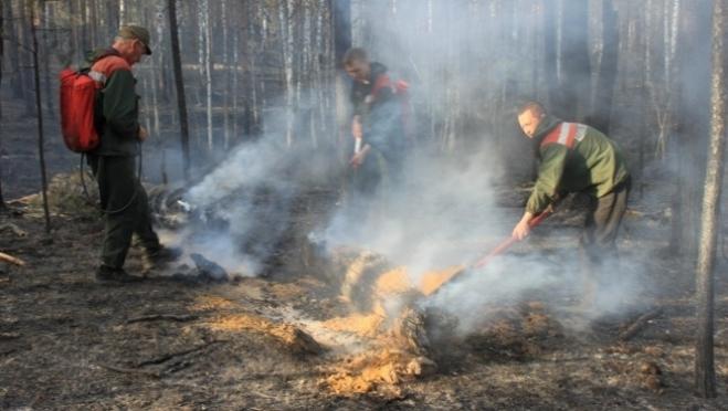 Причина большинства лесных пожаров в Марий Эл – люди