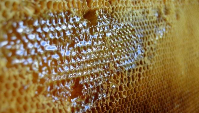 Марийский мёд из деревни Кульшит можно будет купить в магазинах Марий Эл