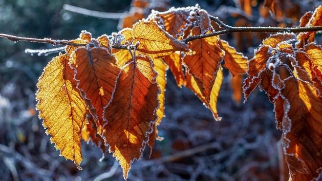 Позимник, грязник, листопад – народные приметы октября