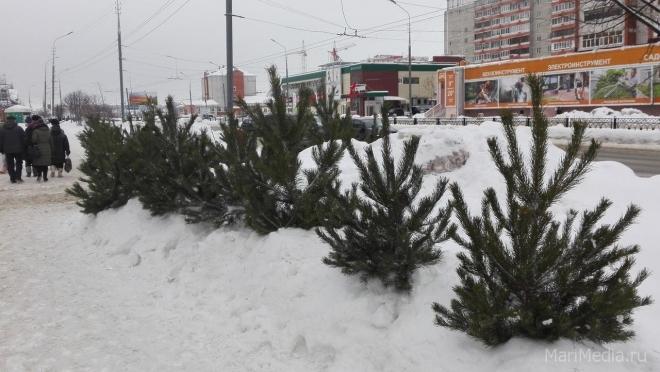 В Йошкар-Оле ёлочные базары откроются на 8 дней в этом году