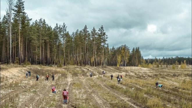В Марий Эл начали  высаживать лес