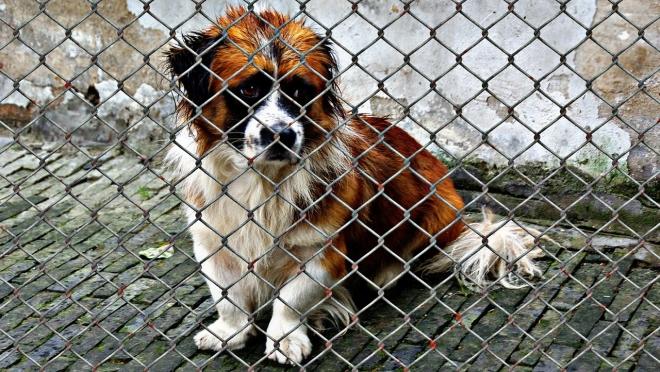 Органы местного самоуправления будут заботиться о животных в приютах