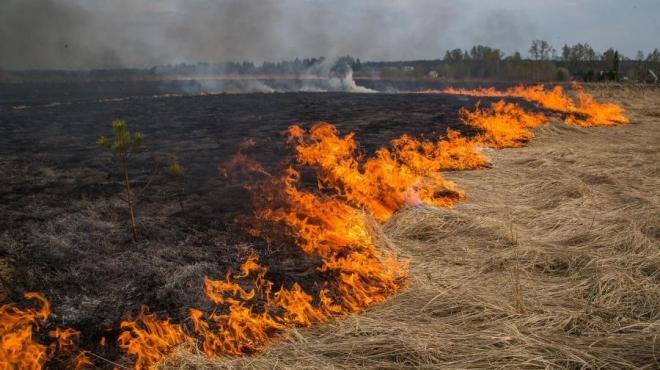 За два дня в Марий Эл произошло 8 возгораний сухой травы и мусора