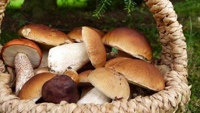 Первое правило грибника: клади в лукошко только знакомый гриб