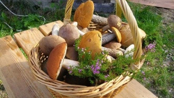Топ-5 блюд из грибов