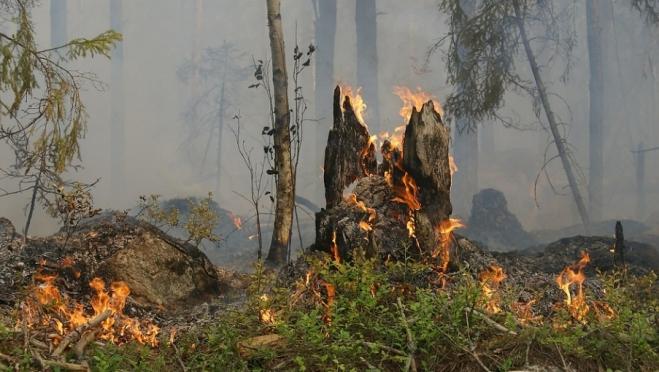 За сутки в Марий Эл произошло 19 пожаров