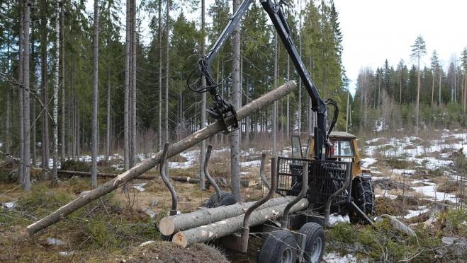 Лесозаготовительное предприятие из Марий Эл должно в бюджет полтора миллиона