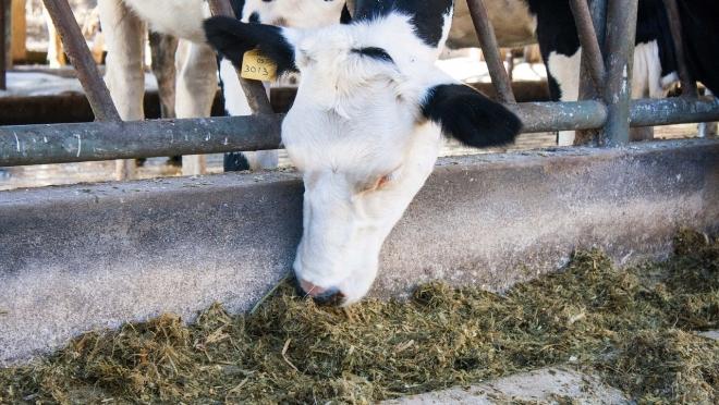В России планируют перерабатывать органический мусор в корм для животных