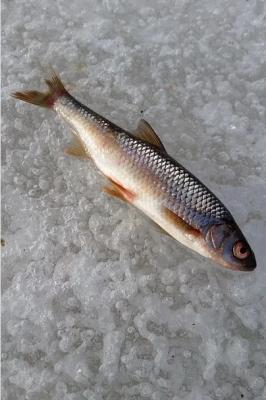 Чемпионат города Йошкар-Ола по ловле рыбы на блесну со льда