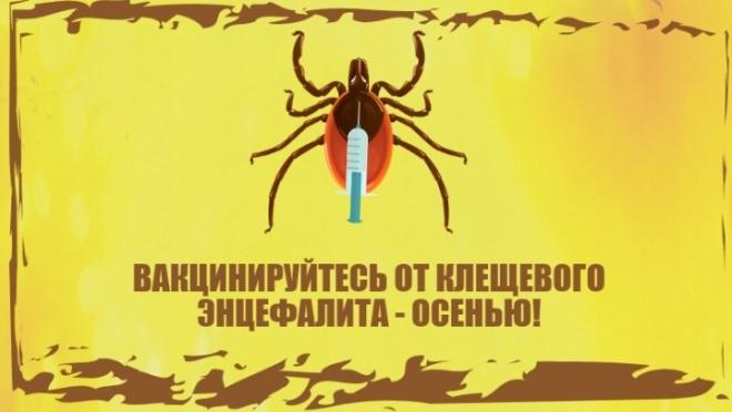 Осенью начинается прививочная кампания против клещевого энцефалита
