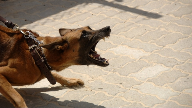 В России предложили наказывать хозяев собак за нападение на людей