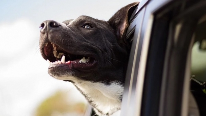 Агрессия пса стоила йошкаролинке 56 тысяч рублей