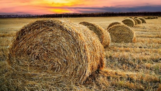 Житель Коркатово сжёг 150 тонн сена, ущерб превысил полмиллиона рублей