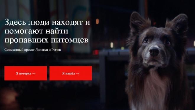 В Йошкар-Оле запущен специальный проект по поиску пропавших животных