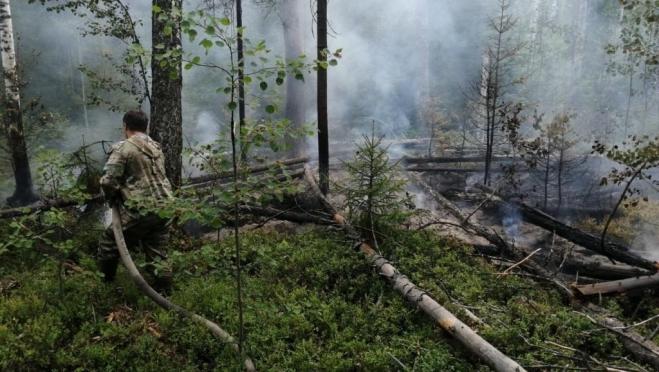 В лесах Марий Эл с начала сезона произошло 67 пожаров