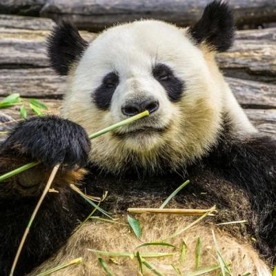 Московский зоопарк в режиме онлайн-трансляции