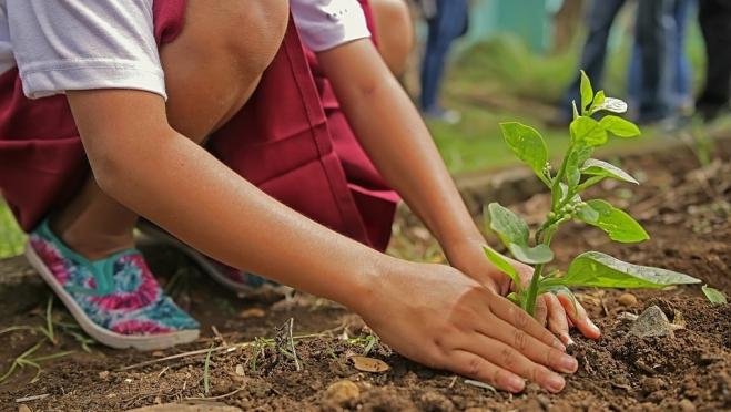 Жителей Марий Эл приглашают принять участие в посадке леса