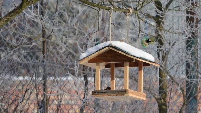 Воспитанники центра «Доверие» сделали кормушки для птиц