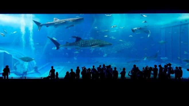 В Самару самолетом доставят акул, скатов, мурен, крокодилов
