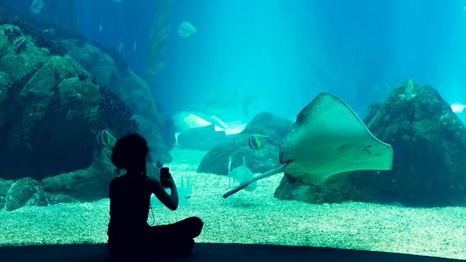 В декабре в Самаре откроют крупнейший океанариум в ПФО