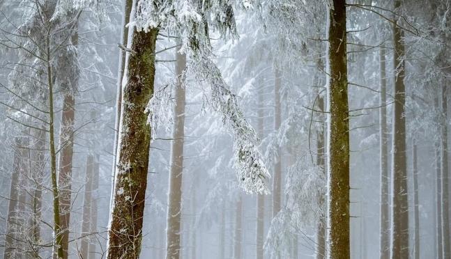 Прокуратура Медведевского района контролирует законность в лесной сфере