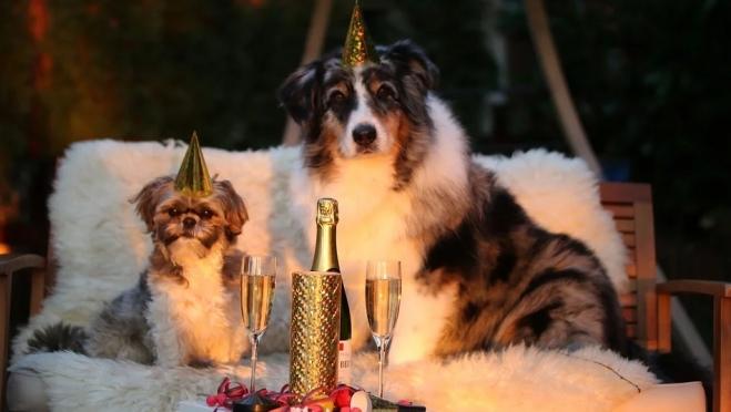 Аналитики выяснили, сколько россиян не любят новогодние праздники