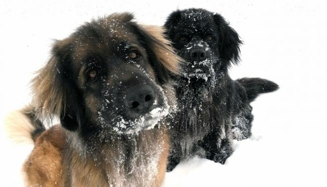 Нужна ли собакам зимняя одежда и обувь