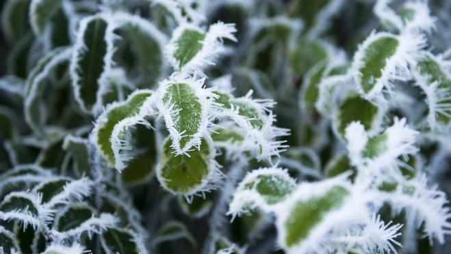 В Марий Эл в выходные обещают заморозки до -4ºС