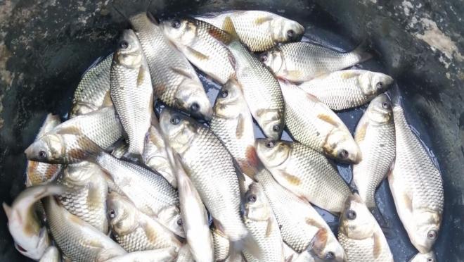 В Марий Эл в прошлом году выловили более 400 тонн рыбы