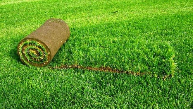 Как правильно выбирать рулонный газон