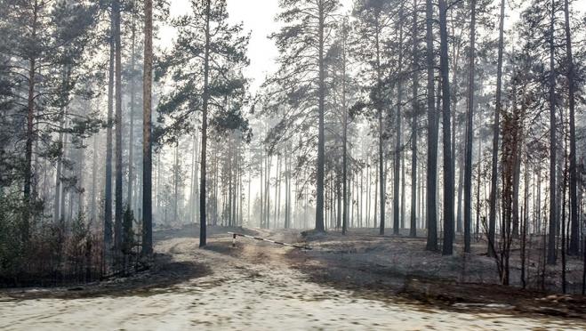В двух районах Марий Эл из-за пожара запретили охоту