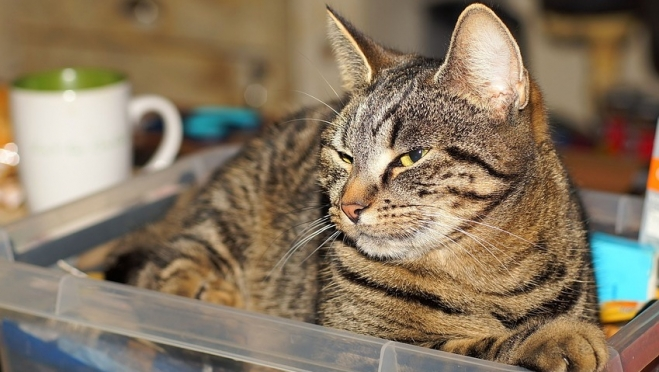 Йошкар-олинские огнеборцы на пожаре спасли кота