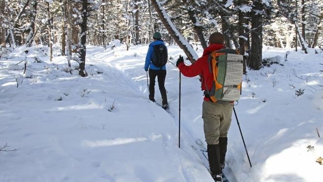 В «Сосновой роще» пройдёт первенство по спортивному ориентированию на лыжах