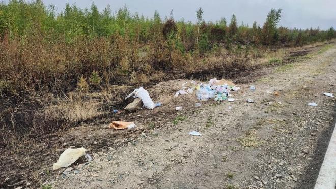 В местах тушения лесных пожаров в Марий Эл возникли стихийные свалки