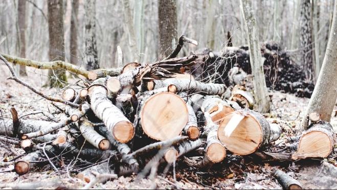 В Марий Эл осудили чёрных лесорубов из Нижегородской области