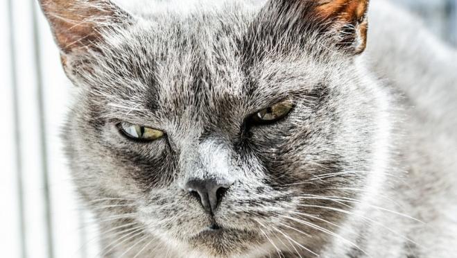 В Марий Эл из-за кошки объявлен карантин по бешенству