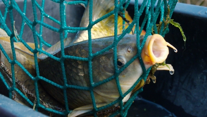 В Юринском районе рыбака-браконьера поймали на месте преступления