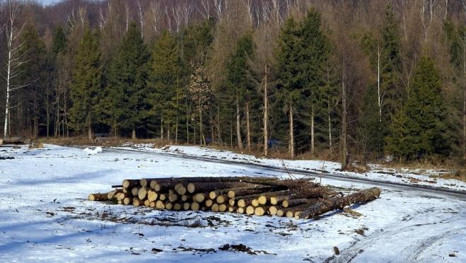 В Новоторъяльском районе черные лесорубы «порезвились» на 4 миллиона