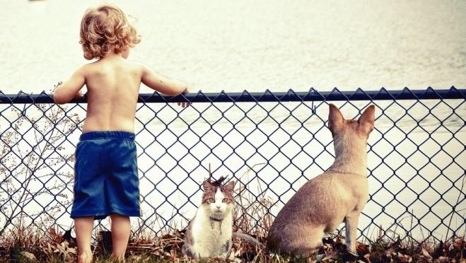 Ребята и зверята – домашние питомцы и хлопоты