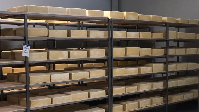 Сырзавод из Марий Эл замахнулся на производство европейских сыров