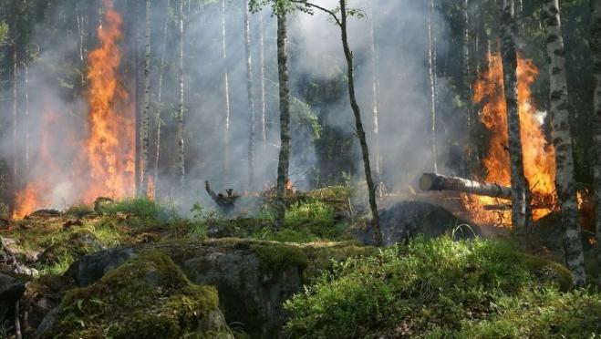 С начала пожароопасного сезона в Марий Эл произошло 9 лесных пожаров